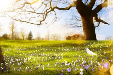 abstract sunny beautiful Spring background Standard-Bild