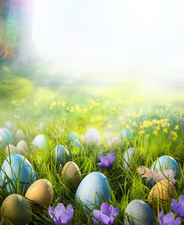 pascuas navide�as: Huevos de Pascua en prado con la flor del narciso