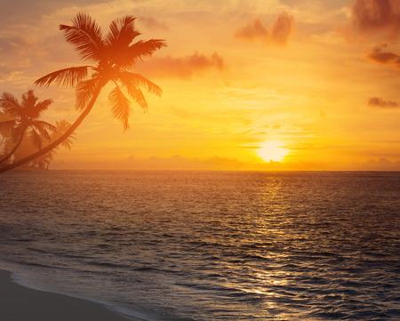 playas tropicales: silueta de las palmeras en la puesta de sol playa tropical Foto de archivo