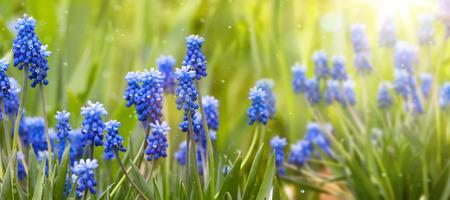 primavera: La primavera y el Fondo de Pascua con flores de primavera