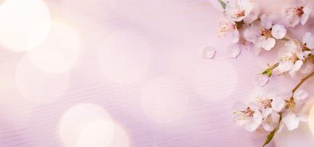 핑크 꽃과 봄 테두리 배경 스톡 콘텐츠