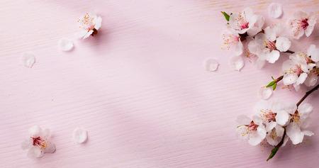 art  spring flowers frame  background 스톡 콘텐츠