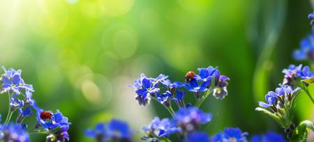 jardines con flores: primavera o el verano de fondo con nomeolvides-flor