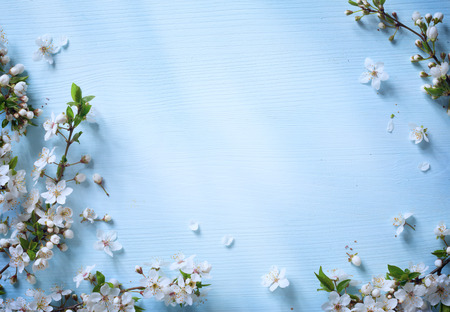 blue abstract backgrounds: art Spring floral border background with white blossom