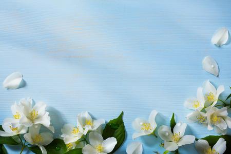 art Beautiful jasmine Flowers Border