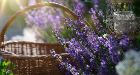 eres flores que florecen cerca de la casa en la Provenza Foto de archivo
