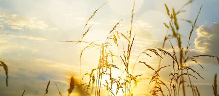 field sunset: art Field of grass during sunset Stock Photo