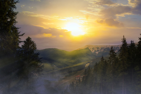 pine forest: sunrise in the mountains Stock Photo