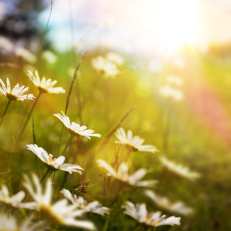 nature background with summer flower in grass