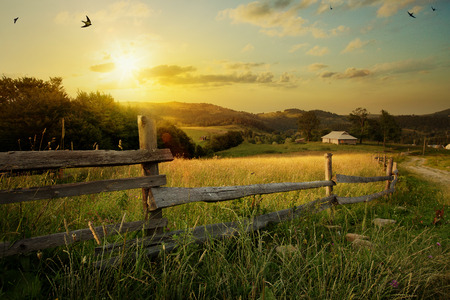 morning sunrise: art rural landscape. field and grass
