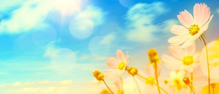 beautiful summer garden flowers