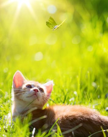 papillon: Art peu de gingembre chat chaton ext�rieur