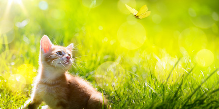 Art  little ginger kitten outdoors Stockfoto