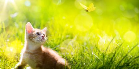 Art  little ginger kitten outdoors Stock Photo