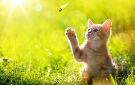 acion: Arte joven gato  gatito caza una mariquita con Contraluz