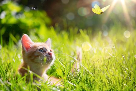exteriores: Arte joven gato  gatito caza una mariquita con Contraluz