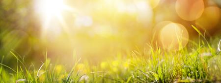 sonne: Kunst abstrakte Frühjahr Hintergrund oder Sommer Hintergrund mit frischem Gras Lizenzfreie Bilder