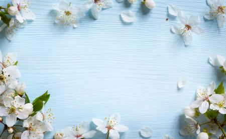 modrý: Jarní hranice pozadí s bílým květy