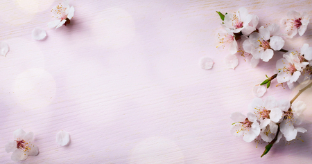 japanese background: art Spring Blooming; spring flowers on wooden background