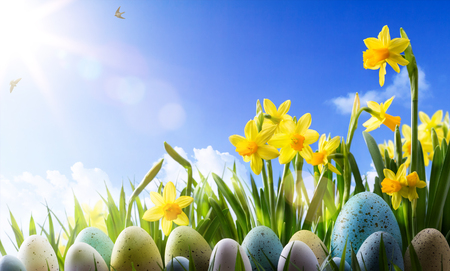 Easter background; Spring flowers and easter eggs