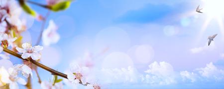 jarní květiny na modrém pozadí oblohy