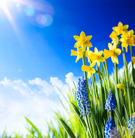 Easter background with fresh spring flowers 스톡 콘텐츠