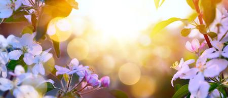 春の開花の背景; 白い花と空の日光 写真素材