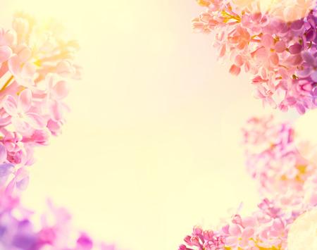 新鮮な春の花と春の背景 写真素材