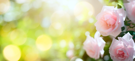 Abstract spring or summer floral background