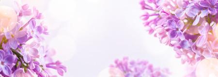 Jarní pozadí s čerstvou jarní květiny