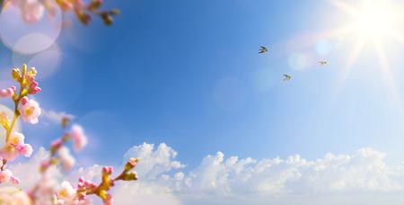 飛ぶ鳥と春の花の春風景の背景を抽象化します。