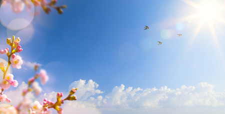 abstract Spring landscape background with flying birds and Spring flower Foto de archivo