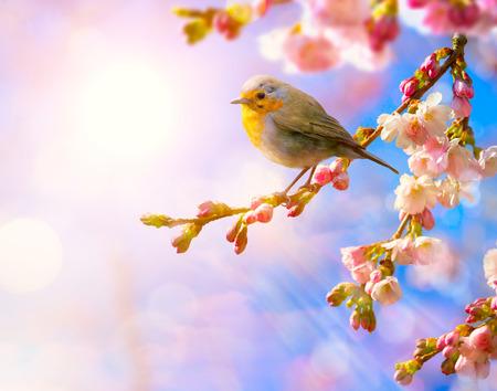 Wiosna streszczenie krajobrazu; charakter kwiatu tła z różowy kwiat