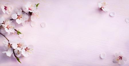 voorjaar achtergrond; verse bloemen op blauwe achtergrond