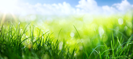 sky and grass: art abstract spring background or summer background with fresh grass  Stock Photo