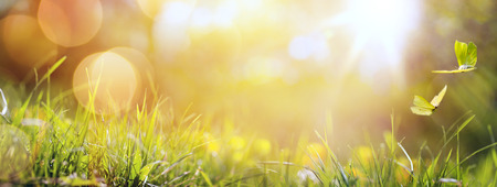 Fleures: art abstrait printemps ou l'été fond avec de l'herbe fraîche et papillon Banque d'images