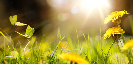 Easter spring flower background; fresh flower and yellow butterfly on green grass background