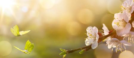 Lentebloem achtergrond; Pasen landschap Stockfoto