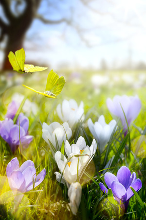 Spring flower and fly butterfly; abstract sunny beautiful Easter background  Stock Photo