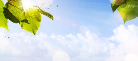 青い空を背景に葉を抽象的な春の背景または新鮮な木と夏の背景