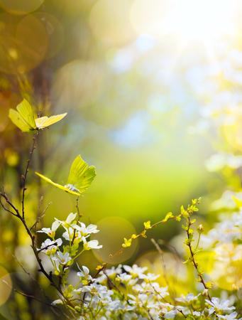 春の花や蝶の飛ぶ;日当たりの良い美しいイースターの抽象的な背景