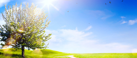 Spring landscape; Easter background with blooming spring tree