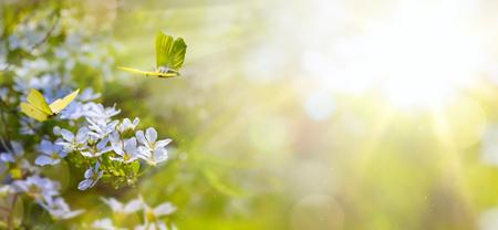 Velikonoční jarní květiny zázemí; čerstvé květiny a žlutý motýl na zeleném pozadí
