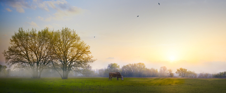 tree farming: Spring countryside landscape; morning farmland field and blooming tree  Stock Photo