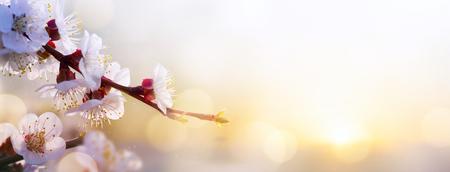 Spring flower background; Easter landscape Stock Photo