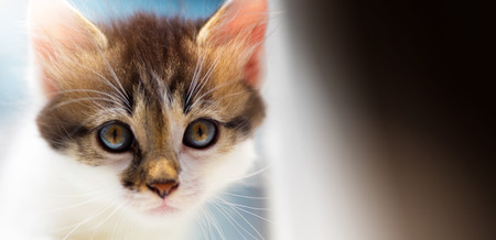 Lost Lone cute kitten is looking for a host Stock Photo