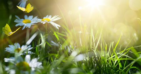 tło wiosna streszczenie lub lato tło ze świeżych kwiatów i motyli Zdjęcie Seryjne