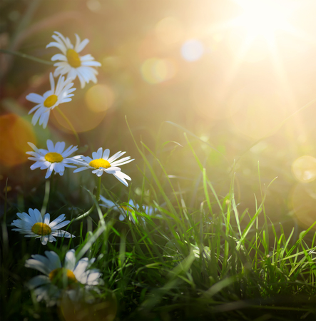 art abstract spring background or summer background with fresh flowers Stock Photo