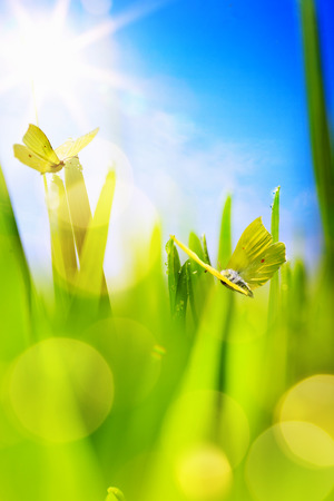 abstract spring Background; spring grass and butterfly