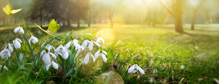 Easter spring flower background; fresh flower and yellow butterfly on green grass background Stock Photo